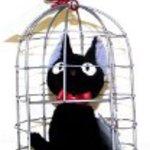 Kiki's Delivery Service in Cage S size