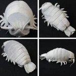 Giant Isopod Realistic Plush Doll (M Size)