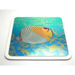 Titanium Coaster  (Gold)