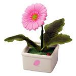 Hanappa Conversation Partner (Pink Daisy)